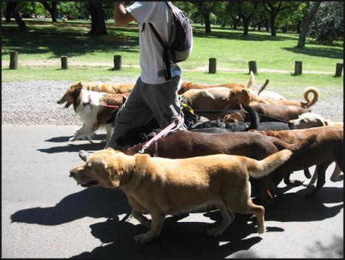 dogs_ff36aafa8b41b4387a91f3e47e8496ed