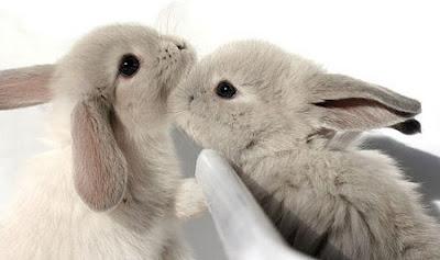 bunnies_13762104c620c371e07b96fbc8b4ba59